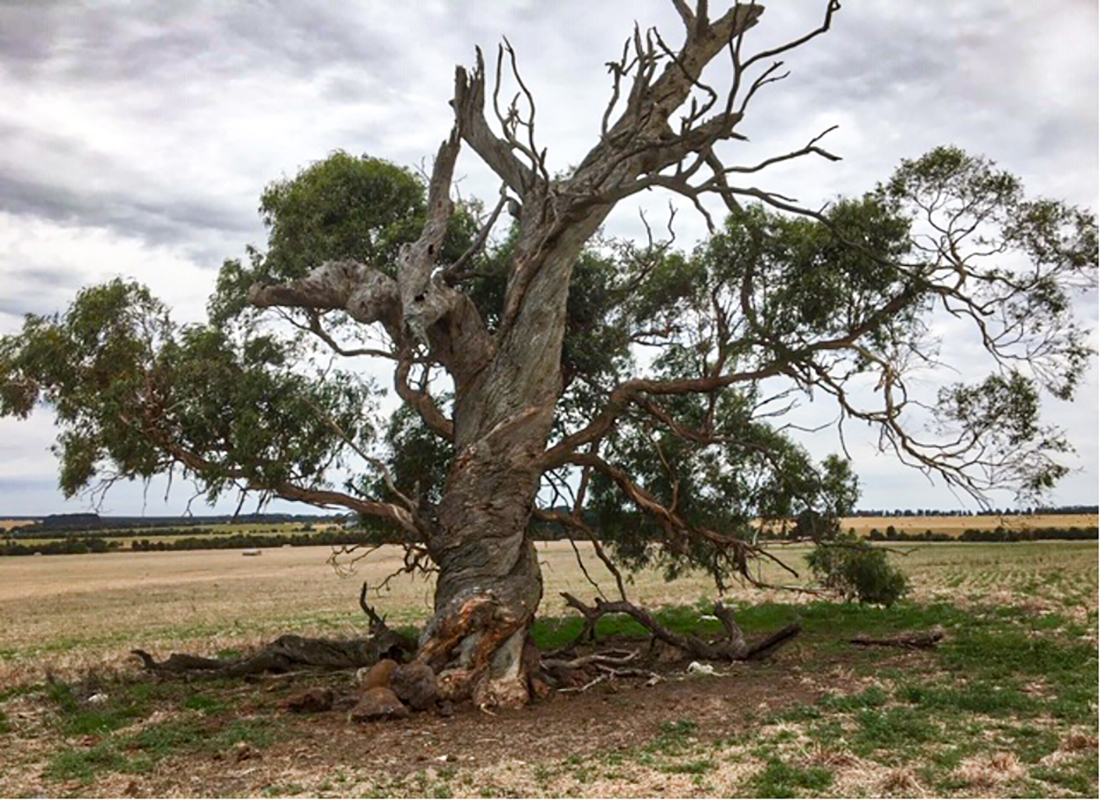 Photo for the Paddock Trees: Hollows and Habitats blog